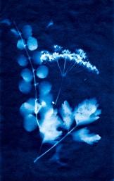 20170904-cyanotype 2